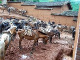 While you are on a bike, many locals still use horses to get to market.